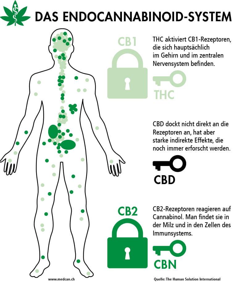 Medizin - Endocannabinoid-System - Medical Cannabis Verein Schweiz